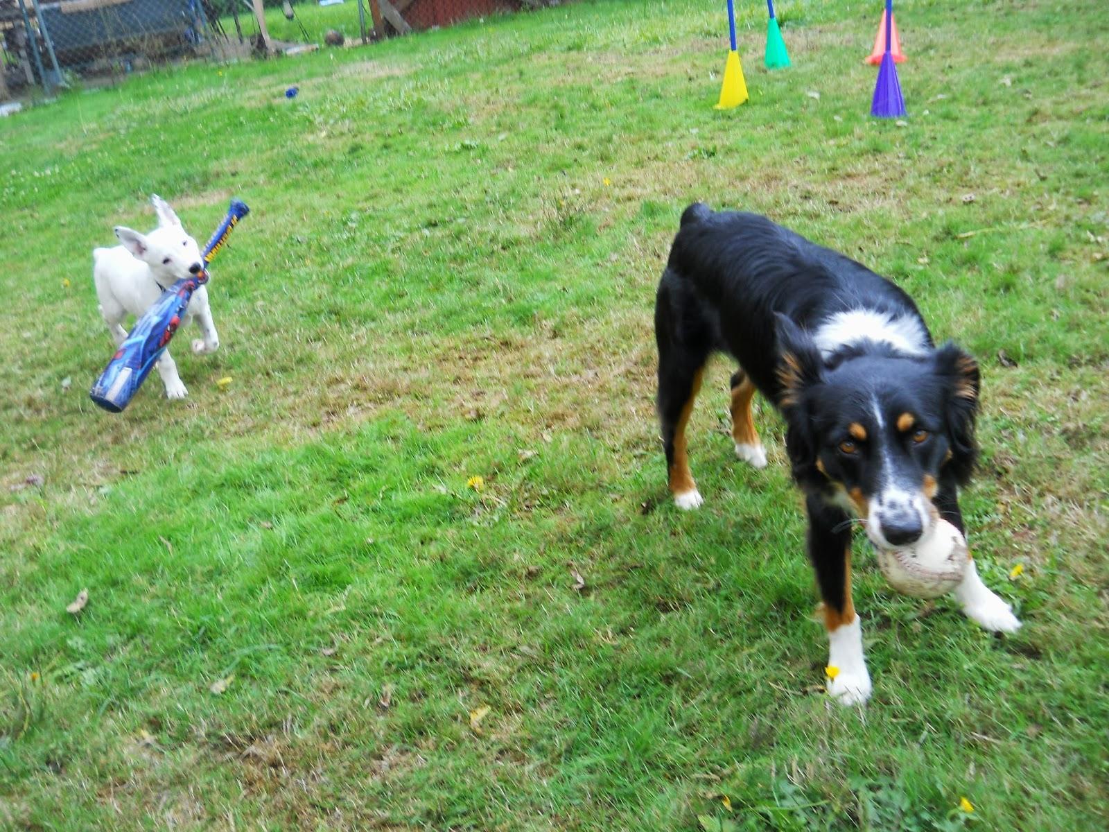Dog Training Mcminnville Oregon