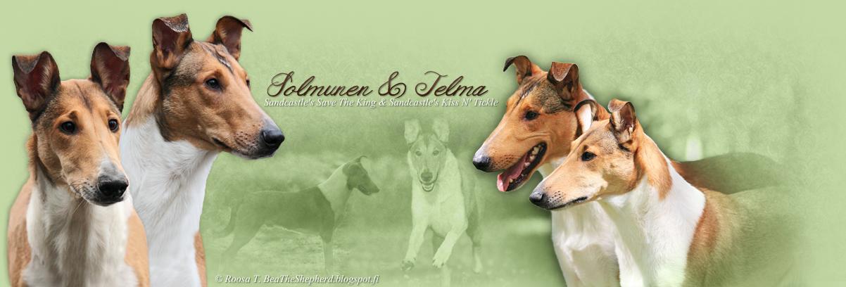 Telman & Solmusen blogi
