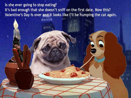 funny animal valentines day cards