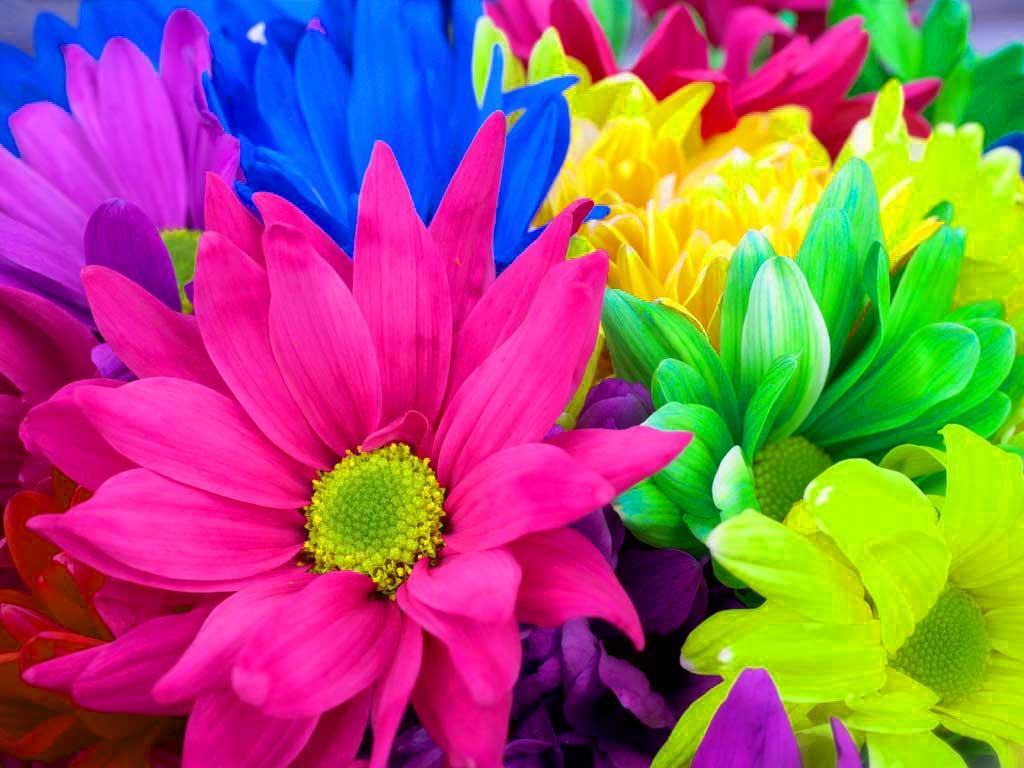 Afbeeldingsresultaat voor colourful flowers