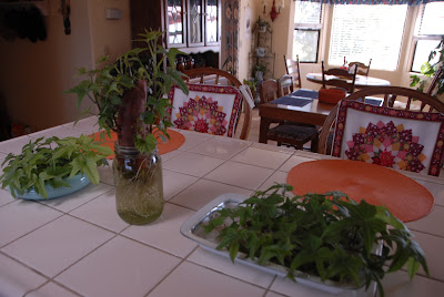 orange kitchen with sweet potato vines