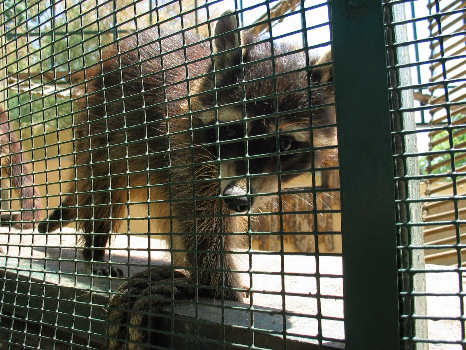 Зоопарк в Стамбуле
