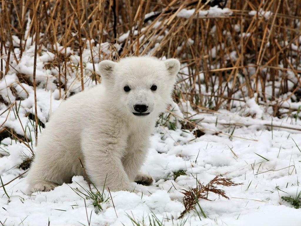 Cute Animals: Baby piglet, Baby panda, baby duck, baby ...