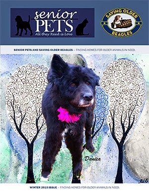 Senior Pets: All They Need Is Love