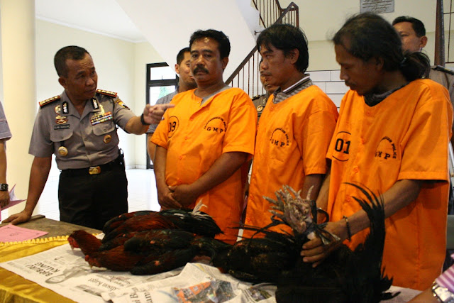 Sebuah gudang perjudian sabung ayam di Jalan Menoreh Tengah XII RT 8 ...
