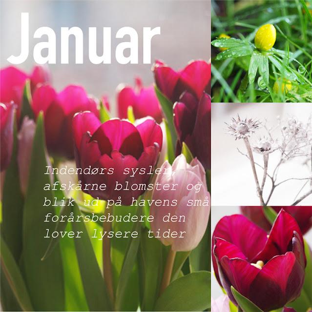 """Haveblog viser blomster i januar i """"Året der gik 2015"""""""