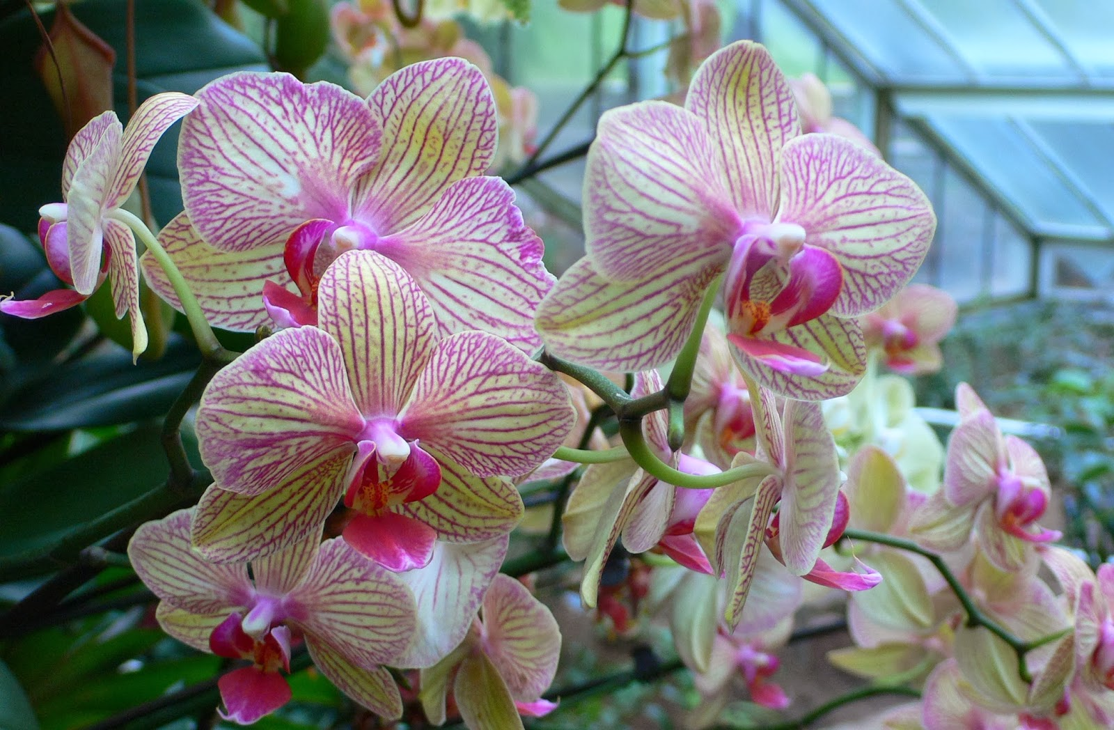 Blok888 top 10 most beautiful flowers in the world 1 orchid festival princess of wales conservatory kew gardens by heather cowper izmirmasajfo