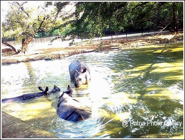 Patna Zoo Rhinos