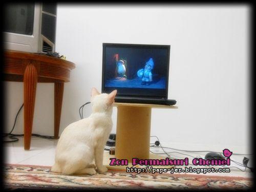 Gnomeo & Juliet, 3D animasi, pets, haiwan peilharaan, kucing tengok movie..