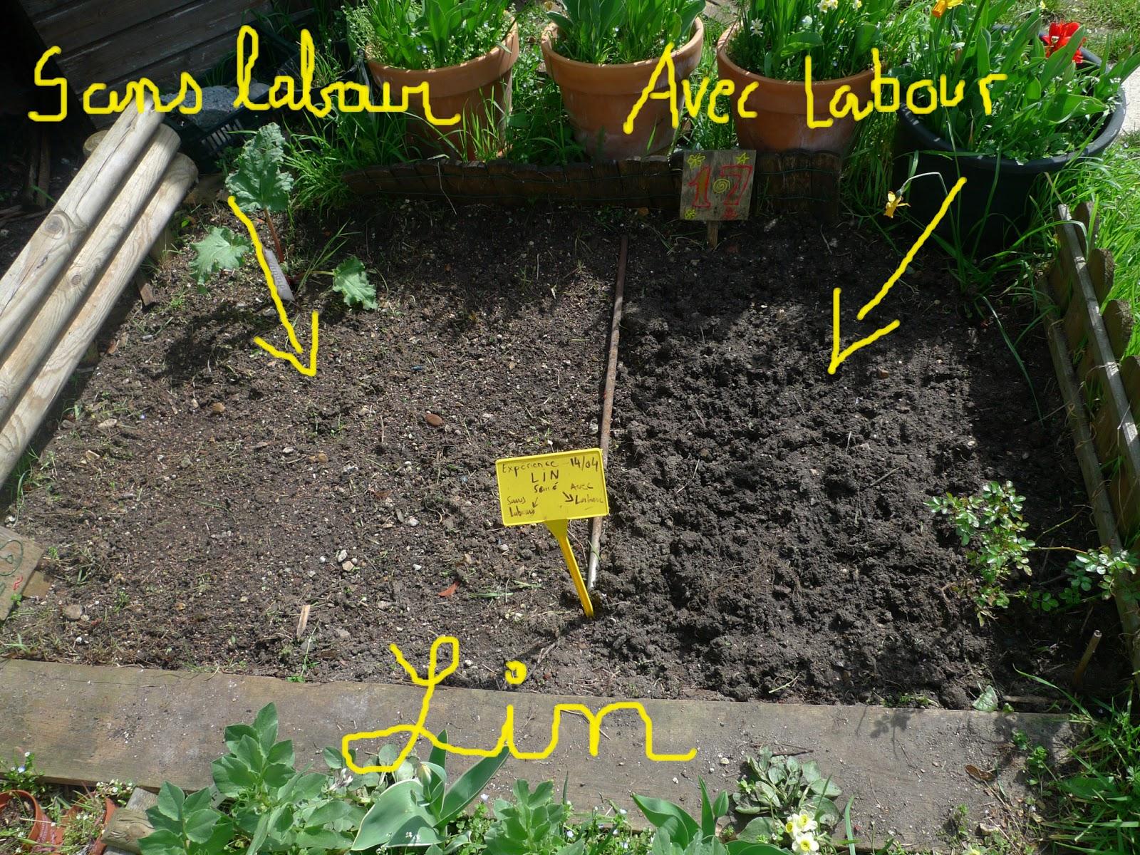 Faire des semis avec ou sans labour une exp rience for Au jardin des sans pourquoi translation