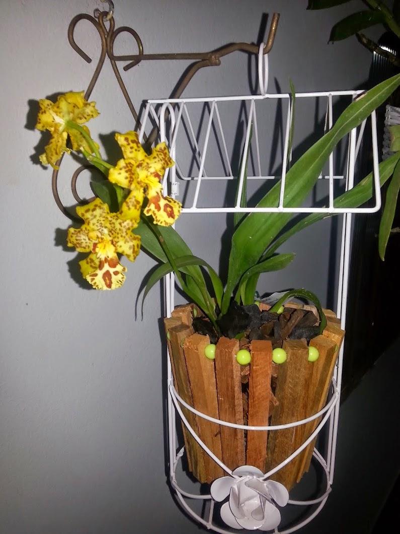 Suporte para Orquídeas....