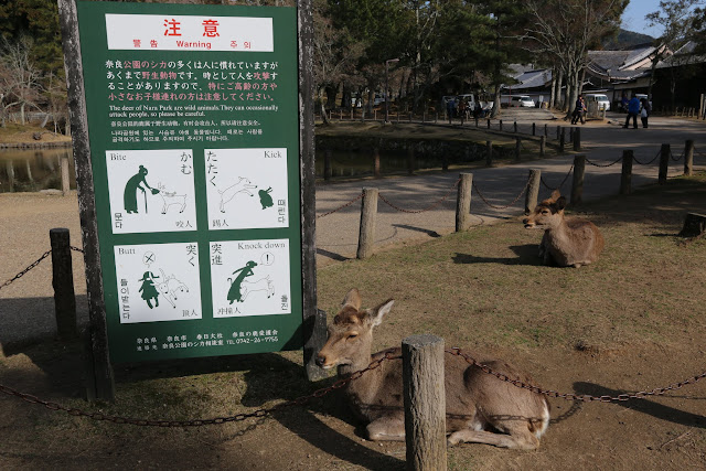 Be careful with Nara deer as some maybe wild to handle at Nara Park in Japan