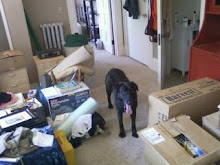 Sadie in clutter