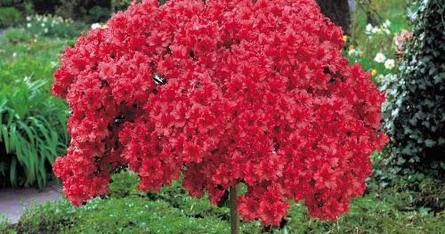 Plantas mais bonitas para jardim