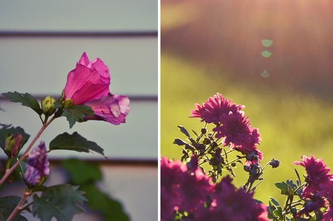 Flowers at Golden Hour