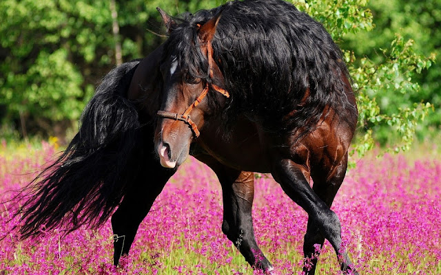 Foto de un Bello Caballo - Imgenes de Animales