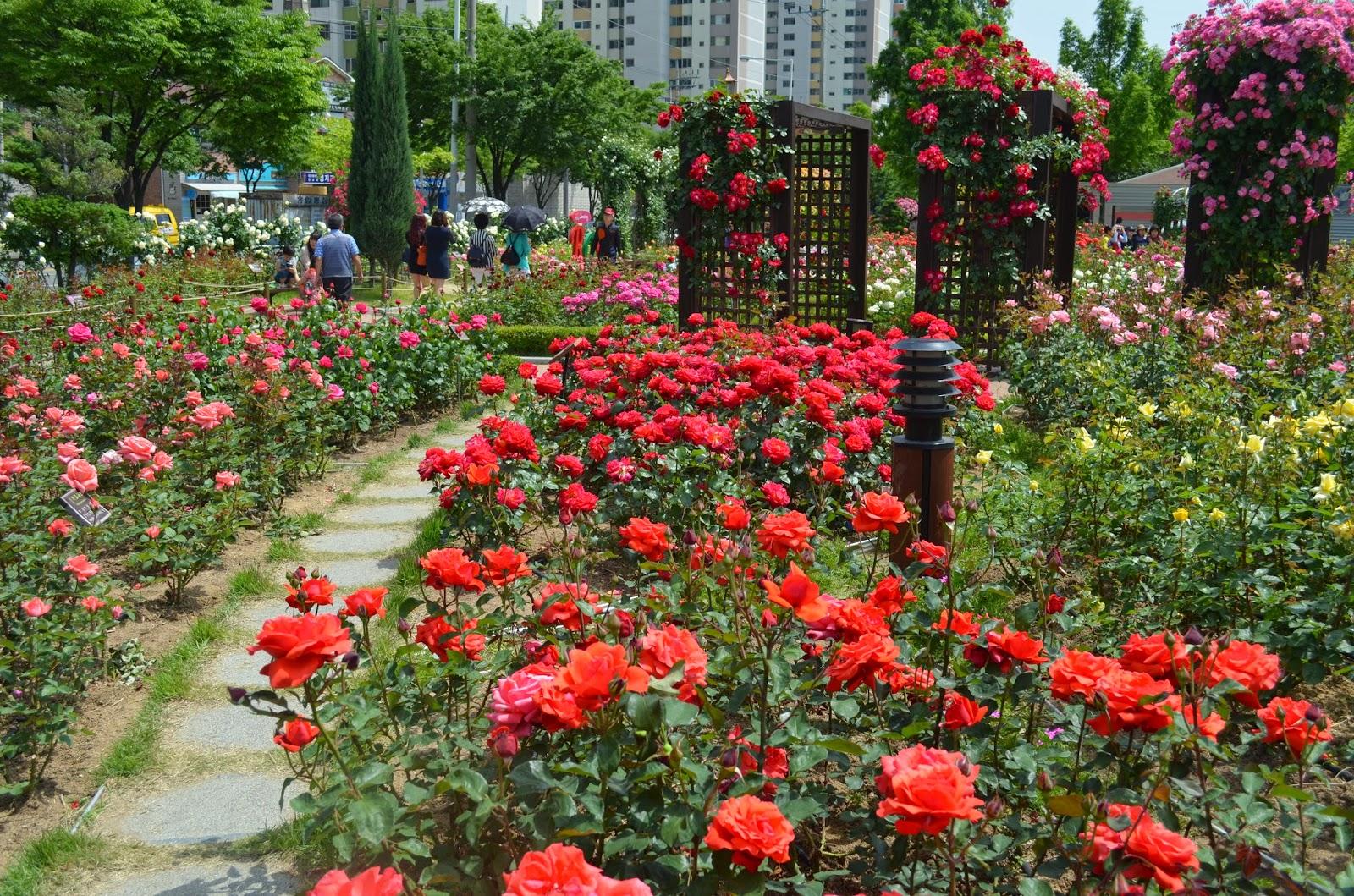 Fun Flower Garden : Fun free daegu travel flower festival