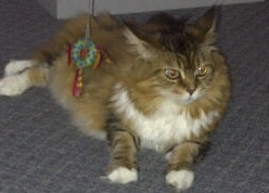 This is Barry's Cat Diva