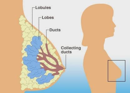 Image Obat Kanker Payudara di Apotik