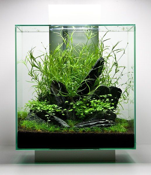Attractive Nano Aquascape