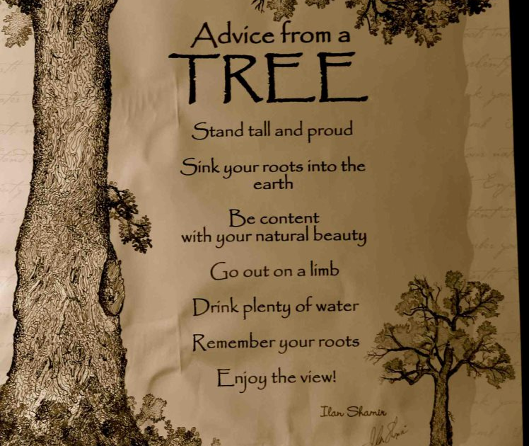 Lavender And Pearls Advice From A Tree