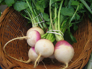 Store turnips in your refrigerator drawer