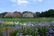 2013.04.04 吉高の大桜