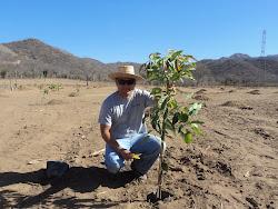 Plantando en el desierto