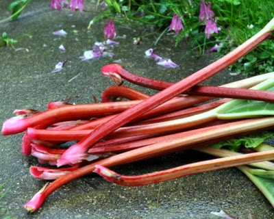 Rhubarb from my own rhubarb patch, recipes ♥ KitchenParade.com.