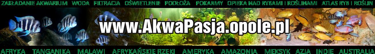AKWAPASJA - AKWARYSTYKA, porady, ryby, rośliny, biotopy, sprzęt akwarystyczny, galeria, filmy