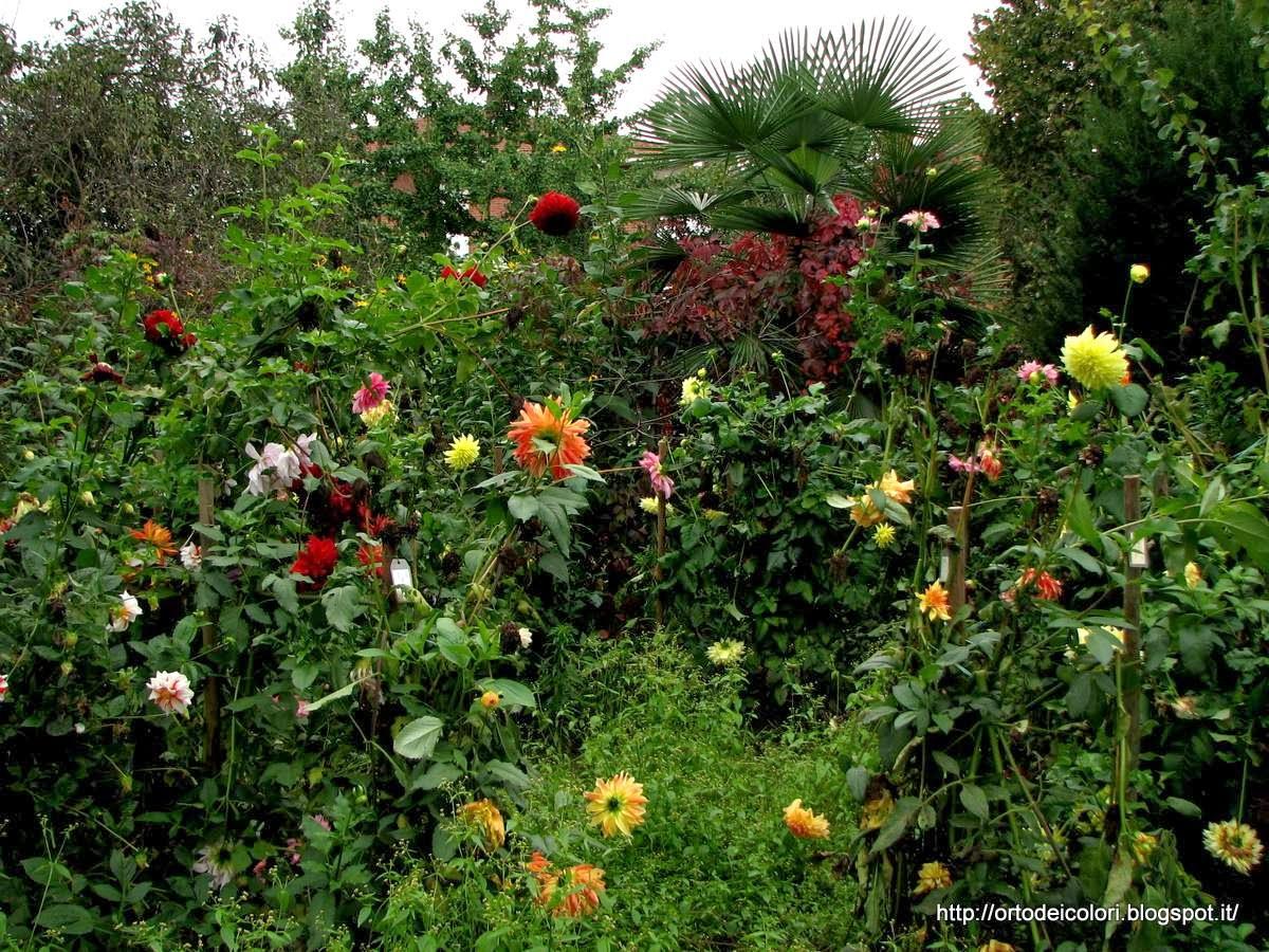 L 39 orto dei colori dalie di ottobre for Dalie giganti