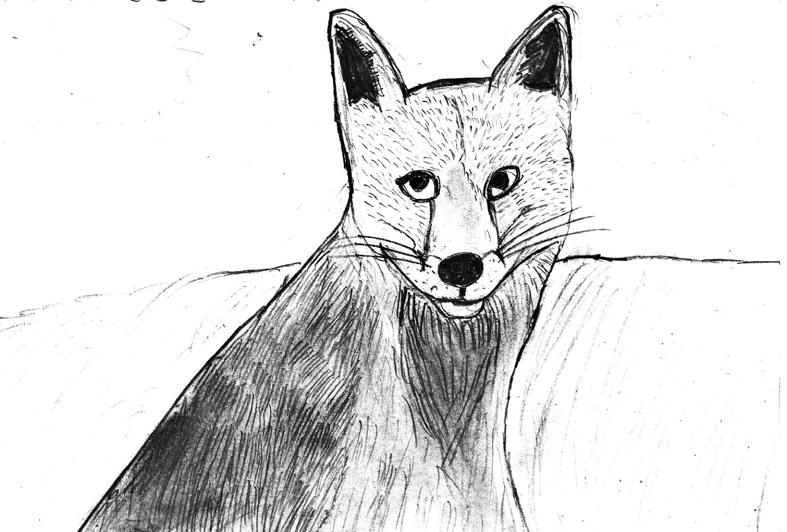 Line Drawing Fox : Diaries of a wildlife and outdoors lover: drawing foxes .