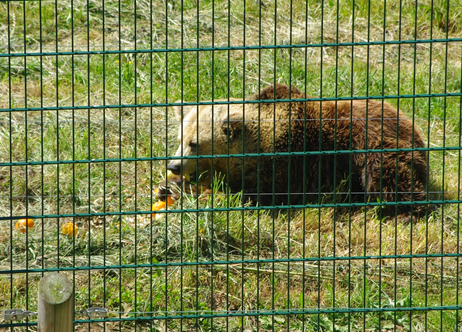 ASTURIAS para disfrutar: Por la Senda del oso (en bicicleta)
