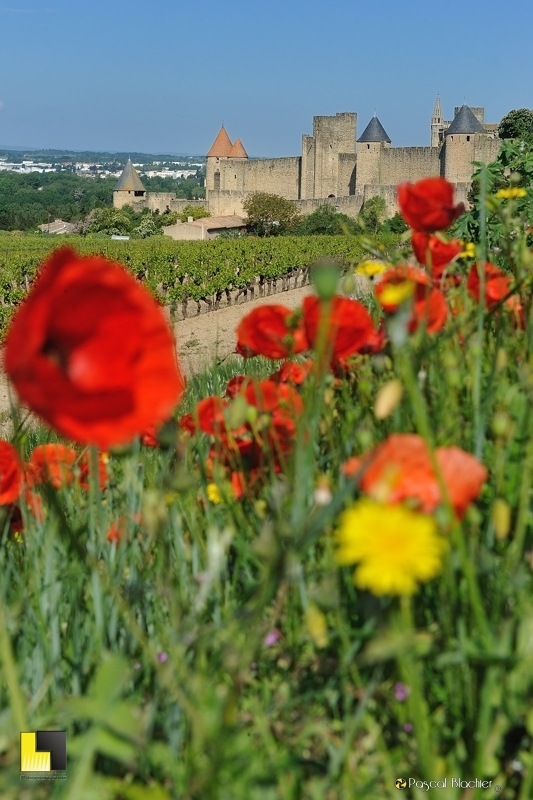 coquelicots en premier plan de carcassonne photo pascal blachier