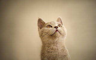 Awesome Cat HD Wallpaper