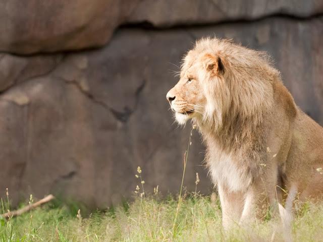 """<img src=""""http://1.bp.blogspot.com/-v_EF49zEZig/UrGq8F3Q8EI/AAAAAAAAF9c/Vqiwrql4m2w/s1600/c.jpeg"""" alt=""""Animal wallpapers"""" />"""