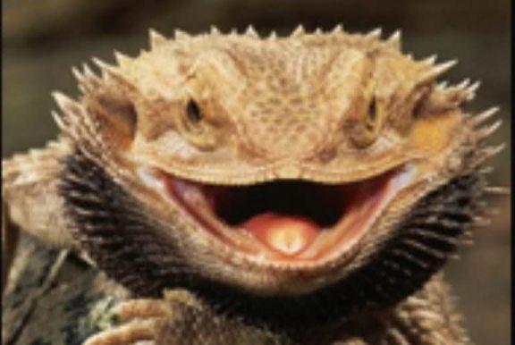 <center><p>The Smiling Dragon</p></center>