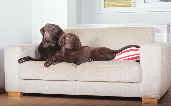 Jak pozbyć się zapachu psa z kanapy?