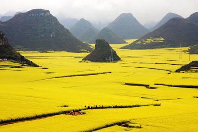 "Un "" océano de flores "" en China"