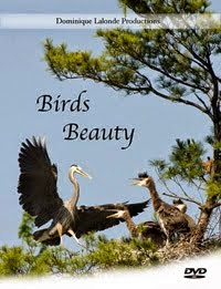 Birds Beauty DVD