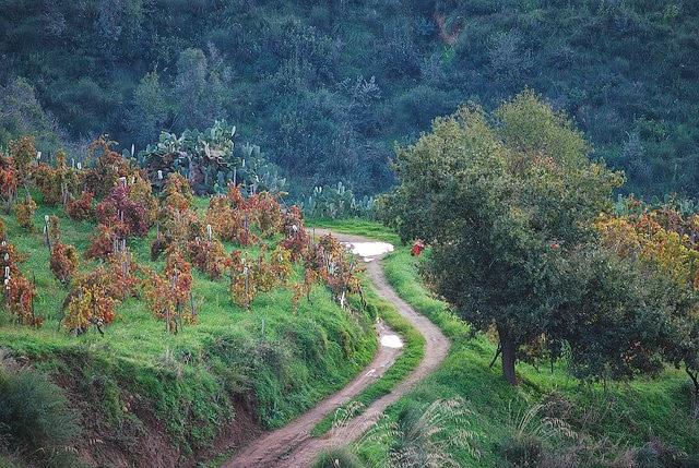 Calabrian landscape