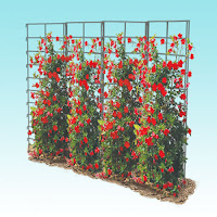 Vertical Gardening with vines