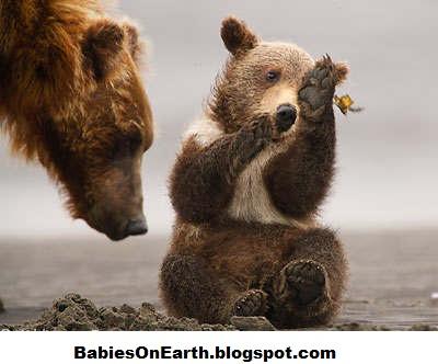 Newborn brown bear - photo#24