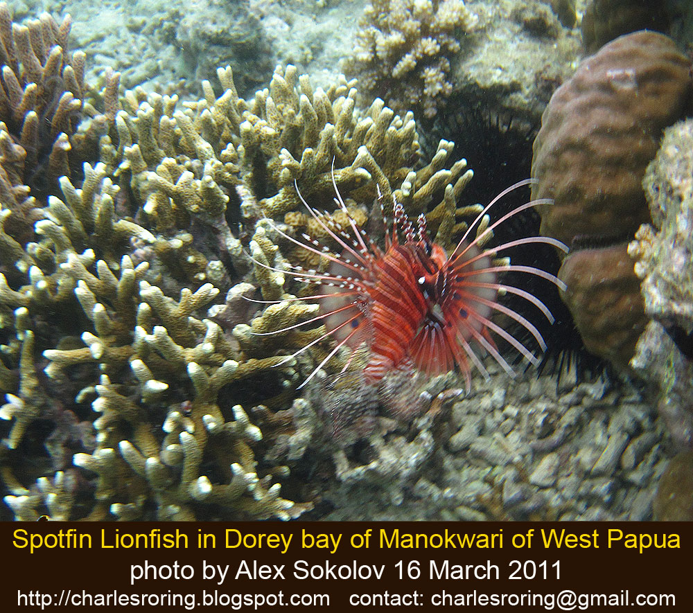 Outdoor Adventure With Charles Roring: Lionfish From The