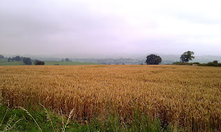 Fields of Barley at Bent Lane coming from Tissington
