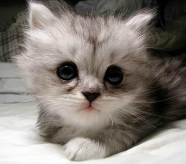 http://1.bp.blogspot.com/-vapp29AXq6I/TfqEqHkMwQI/AAAAAAAABKE/5_wL54pLAGg/s1600/cat_cute3.jpg