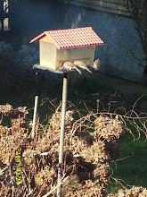 ptičice u mom vrtu
