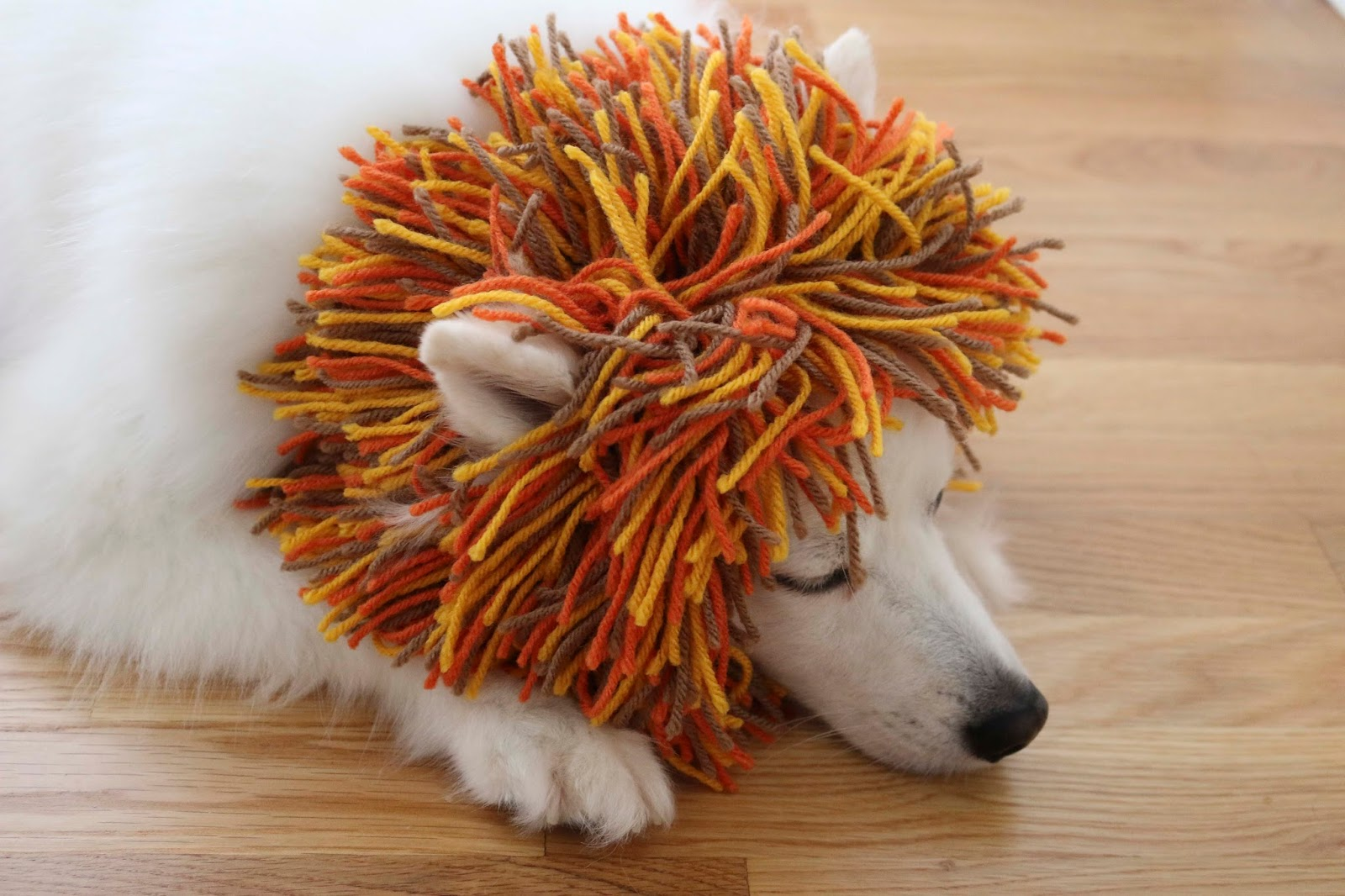 ChemKnits: A Puppys Lion Snood for Halloween