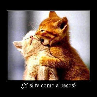 Frases De Amor: Y Si Te Como A Besos