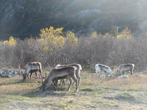 Mijn Arctisch Noorwegen Reis